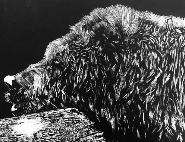 Scratch Art of Bear